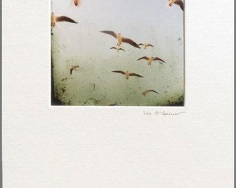 Free as a bird - mounted print