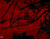 Horror Print - Red Sky with Crows, Dark Art, Dark Print, Weird Art, 8x10, Creepy Print, Dark Print, Birds, Trees, Forest, Poster Art,Digital