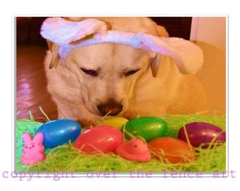 Easter CARD ,Animal Art Easter Greeting Card, Yellow Labrador wears festive Bunny Ears