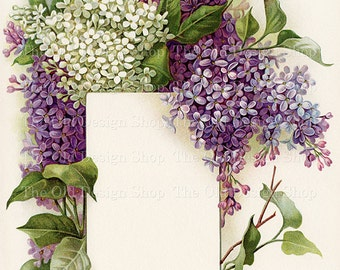 Vintage Lilac Bouquet Printable Art White Lilacs Purple Lilacs Frame a Blank Label Beautiful Floral Illustration Digital Download JPG Image