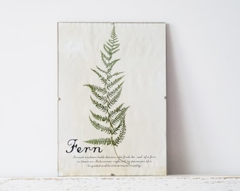 Pressed Herbs- Fern in Frame (5)