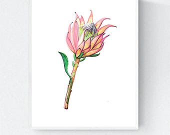 Pink Protea Art Print, Flower Wall Decor, Floral Painting, Botanical Artwork