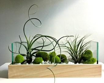 Large air plant terrarium - glass vase Living decor DIY kit - gift for any occasion- zen decor- zen garden
