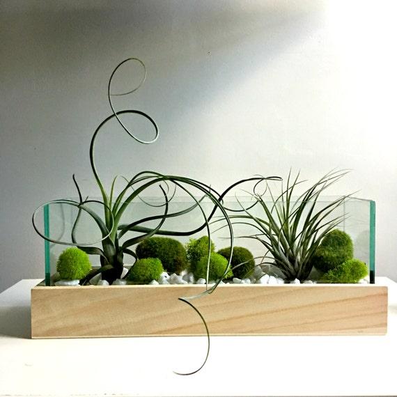 Large Air Plant Terrarium   Glass Vase Living Decor DIY Kit   Gift For Any  Occasion  Zen Decor  Zen Garden From Omorfigiadesigns On Etsy Studio