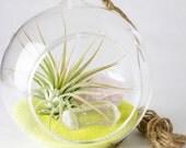 Air Plant, Rose Quartz, Clear Quartz, and Yellow Sand Terrarium Kit || Pink Lemonade || Modern