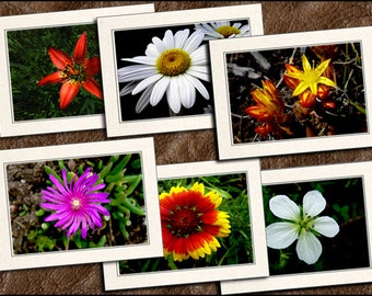6 Wildflower Photo Note Cards Set - Wildflower Photo Greeting Cards Handmade - 5x7 Wildflower Cards - Photo Note Cards Handmade (GP343)