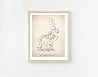 Rabbit Anatomy Art Print. Science Illustration. 8x10 Print. Science Art. Unique Veterinarian Gift. Bunny Skeleton Decor. Hipster Wall Art.