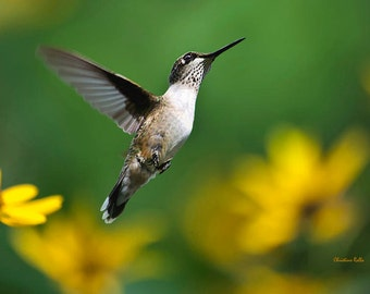 Hummingbird Print, Hummingbird Art, Fine Art Photography, Wildlife Prints, Bird Photography, Nature Gifts, Hummingbird Wall Art, Bird Decor