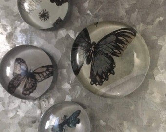 Nature Collected in Butterfly's set of four Glass Magnets
