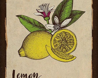 Lemon Kitchen Print, Rustic Kitchen Wall Decor, 11 x 14 Poster