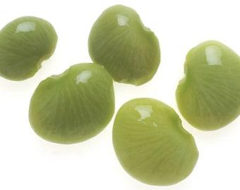 50 BABY LIMA BEAN Phaseolus Lunatus Vegetable Seeds