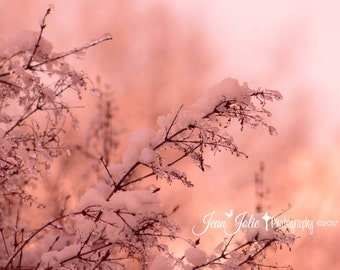 lilac tree wall art lilac tree print lilac tree Photography home decor pink coral nature photography winter romantic fine art photograph
