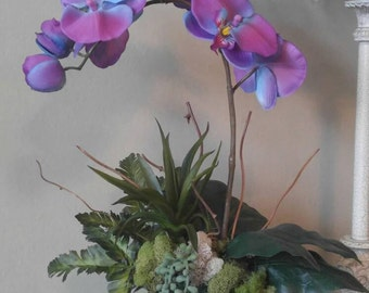 Tropical Phalaenopsis Orchid Arrangement, purple and blue orchids, succulents, with moss and fern, bark covered wood base.