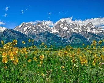 Grand Teton National Park Spring Wildflowers In Teton Valley Beneath Teton Peaks Fine Art Giclee Print. Modern Wall Art, Jackson Hole
