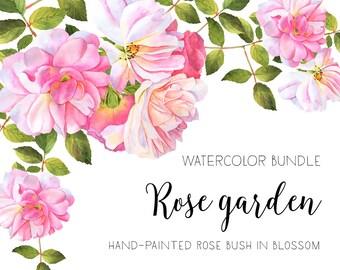 Roses watercolor clipart, Flower illustration, Watercolor bundle, Watercolour roses, Roses bush, Roses bouquet, Clipart, Rose Bunch, Decor