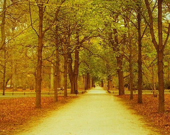 Berlin, Tiergarten,  35mm Photography Print. Art, Photography, Germany, Nature, City, Urban, Colour, Park, Woodland