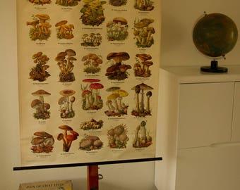 Pull Down Chart  Mushroom II  School Chart