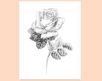 Black and white rose drawing, pen and ink sketch flowers, floral prints, rose artwork, botanical art, floral pictures, rose illustration