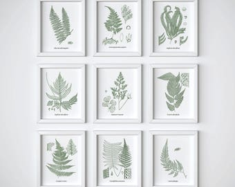 Home wall decor, Instant download print set, Set of 9 prints, Antique fern illustrations, Illustration set, Vintage botanical print set, JPG