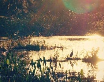 Crane at sunset travel nature photography, sunflare, wildlife, Florida landscape, soft light, romantic, dreamy, fine art photography