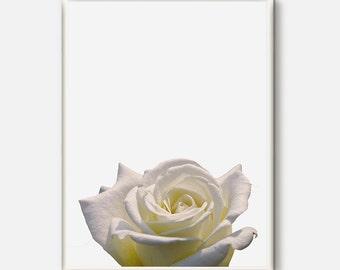 Flower Artwork, Flower Photo, Flower Art, Flower Print, Botanical Photography, Flower Photo, Botanical Decor, White Flower Prints, Rose Art