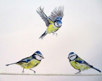Blue tit wall decals, bird wall sticker, bird home decor, summer decor, country decor, woodland wall decals, blue tit decal, bird decal