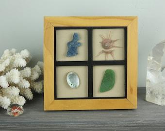 Seashell Picture, Seashell Display, Beach Decor, Coastal decor, Seashell Collage