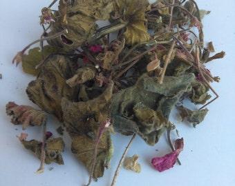 Geranium (Geranium spp.)