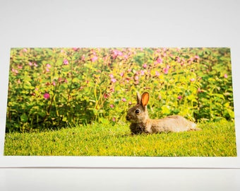 Greeting Card:  Baby Rabbit Resting