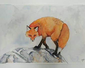 Fox on rocks