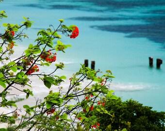 Tropical Flowers and Beach in Aruba