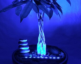 Bring Houseplants to Life at Night. Discreet LED lighting for Your Potted Creations