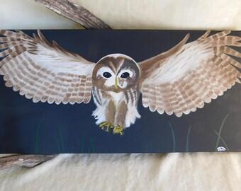 Owl Flying
