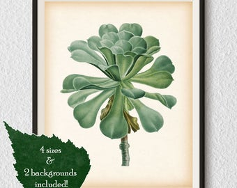 Succulent print, Instant download, Vintage botanical print, Antique print, Succulent illustration, Wall art botanical, Printable art #81