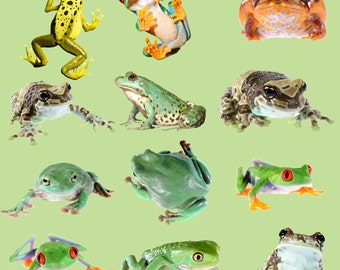 Buy 3 get one free. Frog Transparent Overlays x 12 Pack 1, High Resolution, Instant Download.