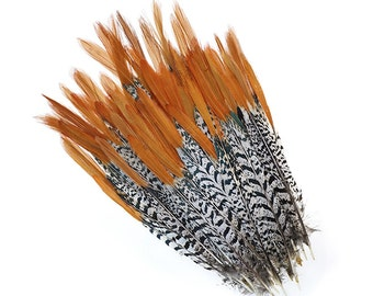 Lady amherst Pheasant feathers (red)