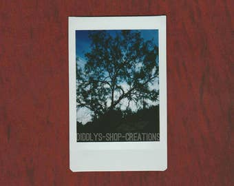 Tree Branches with Blue Sky - Fujifilm INSTAX Film Photograph