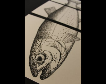 3 in 1 Rainbow Trout Fish Print, Ink Zoological Drawings, Detailed Realistic Aquatic Black & White Art