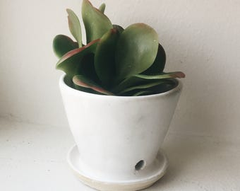 Mini White Planter with Drainage, Indoor Gardening, Ceramic, Wheel Thrown Pottery, Flower Pot, Succulent Planter, Minimalist, Gifts for Her