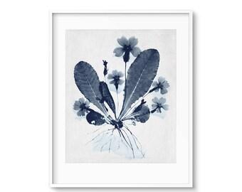 Botanical, Flower Art, Flower Wall Art, Botanical Print, Photogram, Modern Botanicals, Contemporary Art, Printable Art, Gallery Wall, Print