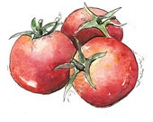 Watercolor tomatoes, Tomato illustration, Original Watercolor Painting, Tomato Art, Vegetable wall art, Home decor, Red, Green, Pen and Ink