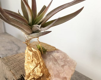 Gold Dipped Rose Quartz Crystal  with air plant (Tillandsia), air plant gift, best friend,  gift, holiday LOVE crystal, wedding favor