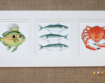 Sealife Triptych Print, John Dory, Mackerel, Spider crab.