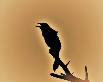 "Pond House Birds Silhouette Greeting Card--""Squawking"""