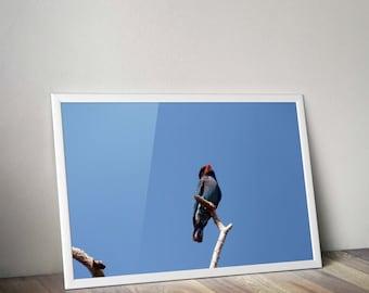 Original Photograph of a blue bird taken in thailand digital download