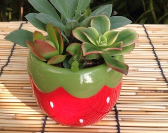 Red and Green Strawberry Planter with live succulents