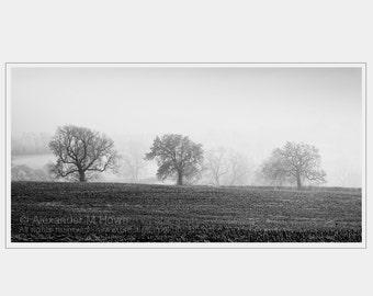 Three Trees in a Field - Black & White England Art Print