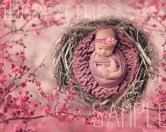 CHERRY BLOSSOM newborn bird nest digital background/newborn digital backdrop
