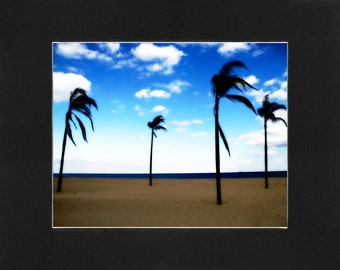 """Custom Matted Print 0102. """"Jersey Shore Palms"""" - Collectable Photographic Artwork. (11"""" x 14"""")"""
