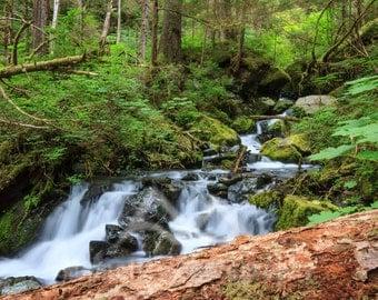 Alaskan Tranquility